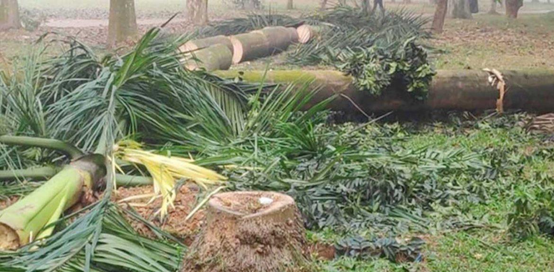 সোহরাওয়ার্দী উদ্যানের গাছ কাটা বন্ধে লিগ্যাল নোটিশ
